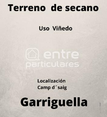 Terreno viñedo (1)