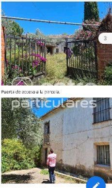 fotos vencejo1 y 2